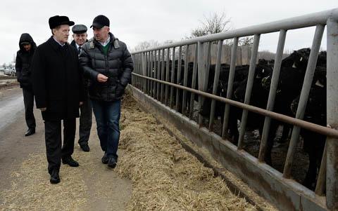 губернатор гордеев в племенном хозяйстве Бобров