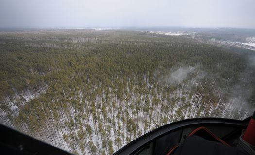 бобров лес зимой