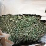 марихуана бобров