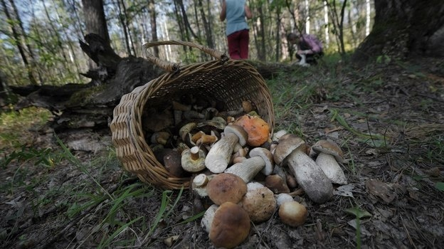 полицейские искали грибников в боброве