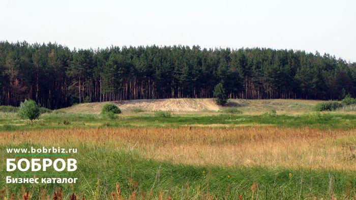 Житель Боброва вырубил в лесничестве сосны
